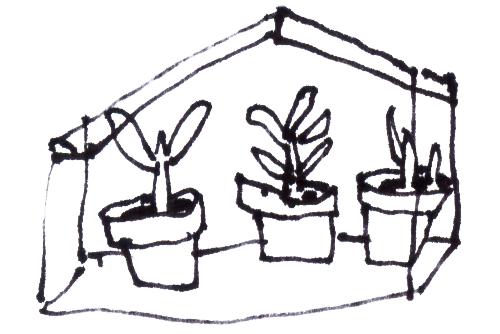 een blog is een plant