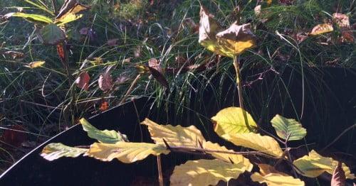 waarover blog je als je het bos in wil